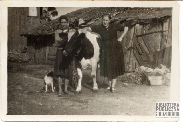 Podwórko rodzinne rozmówcy, ul. Noniewicza, dawna numeracja 13 lub 15. Z lewej strony Zofia Burba, z prawej – p. Gałkowska, matka suwalskiego stolarza Szczepana Gałkowskiego. Na zdjęciu krowa hodowana przez matkę rozmówcy i pies należący do rodziny. Z tyłu widoczne chlewy.
